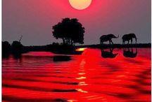 Africa   Dubai UAE  Botswana