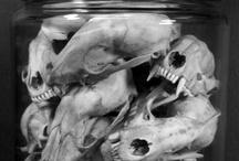 """Ideas"" by Animal Skulls / by UbiquiteTatoo by DomDom"