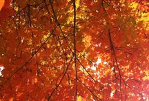 Outdoors / Fall leaves