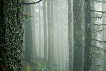 mountain bike trials / Me