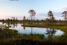 kansallispuistot