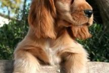 cute doges