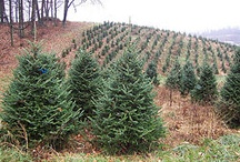 Mary's Christmas Tree Farm / by Keith Nagel