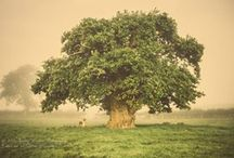Tremedous Trees / 0