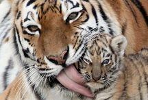 Animals & Beauty