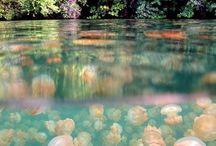 Tropical islands (Indian ocean, Polynesia, Micronesia, Melanesia, Carribean)