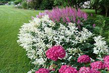 záhon s hortenzií a dalšími květinami