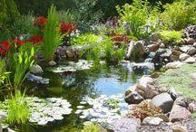 Bassins de jardins