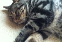 猫様 / 2012年7月19日 享年4歳2ヶ月