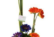 Gerberas - Floristería Celiflor / El lugar perfecto para las amantes de las gerberas. Diseños exclusivos. Pídelos en www.floristeriaceliflor.com