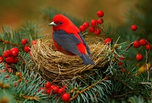 Christmas / by Sharon Borland