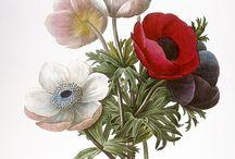 Çiçek kuş desenleri