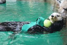 Aquarium & Zoo / by Kelly Elizabeth