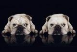 Honden in het nieuws / Waar honden het nieuws halen