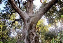 LA trees