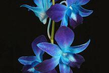 Flowers / by Sue Wilcox