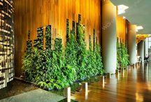 Green Interior Walls