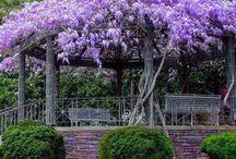 Trädgård - secret garden