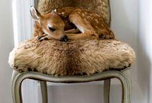 Hello The Bambi