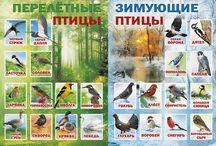 птицы / материалы к тематическим занятиям