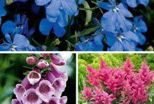 Garden Plants for Shade