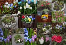 Ullapool gardens open day 5th April 2014 / The first of this season's open gardens day in aid of Ullapool Museum. Gardens will be open on the first Saturday of each month April to September. Details, tickets and maps from museum.