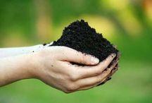 Garden: Soil / by A B