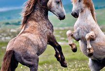 [P] Konie i Kuce