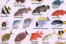Fish_Guide