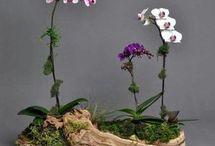 Arranjos de orquídeas