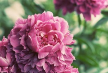 Unique Flowers and Plants / To brighten and make your garden the MOST unique!
