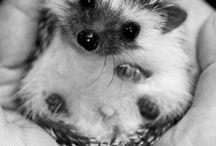 Cute pet i want