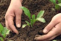 Grow Organic Vegetable Community / People with like interests learn and share great ideas in Gardening !