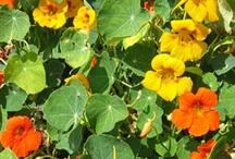 MNH garden plants