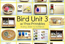 Bird Learning Activities / Bird themed learning activities for kids - Montessori Bird themed printables and learning.   #montessoribirdactivities #montessoribirdprintables