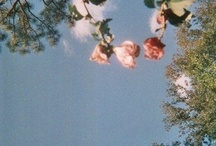 Flowers / by Nadine Shami