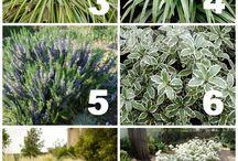 Gardening / Drought tolerant plants
