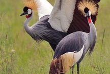 παραδισένια πουλιά