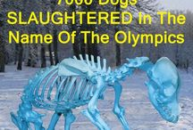 Sochi 2014 Dog Slaughter