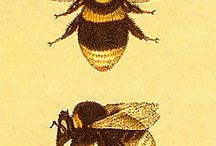 honey bees / by Alex Norby