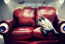 Plush Paws Products Halloween Contest / Compilation of images from Plush Paws Products Halloween Contest  Details: Send us a picture of your pet with their cutest Halloween costume and get a chance to win Plush Paws Produccts Pet Seat Cover!