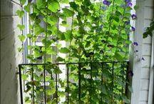 mon reêver balcony