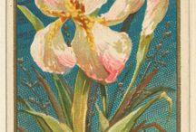 cuadros / de flores y paisajes