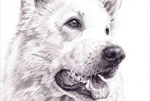 Bleistiftzeichnung von Tierportrait - Kunstatelier Carola Meyer