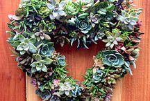 Succulent Wreaths/Creations