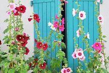 Garden dreamssss