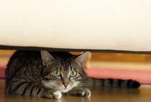 odeur chat