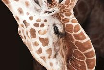 Cute Animals / All creatures big and small / by Shelley Munro: Author