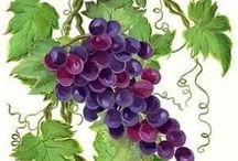 фрукты натюрморт