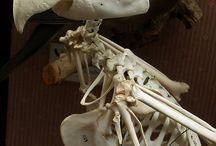 Animals Skulls and Skeletons